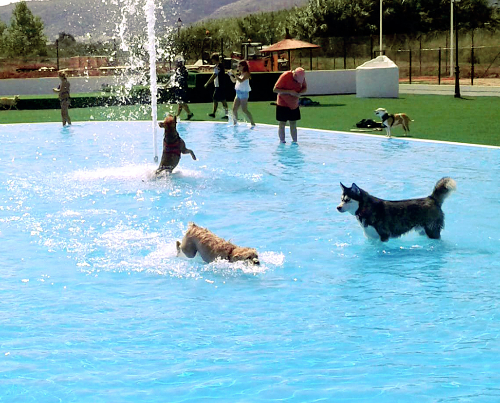 LA MAYOR PISCINA CANINA DE ESPAÑA EN ALICANTE