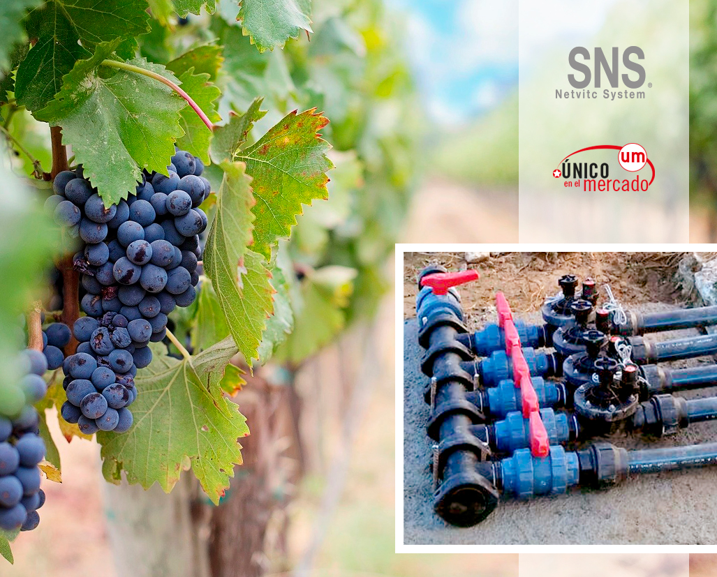 IRRIGATION SYSTEMS FOR VINEYARDS
