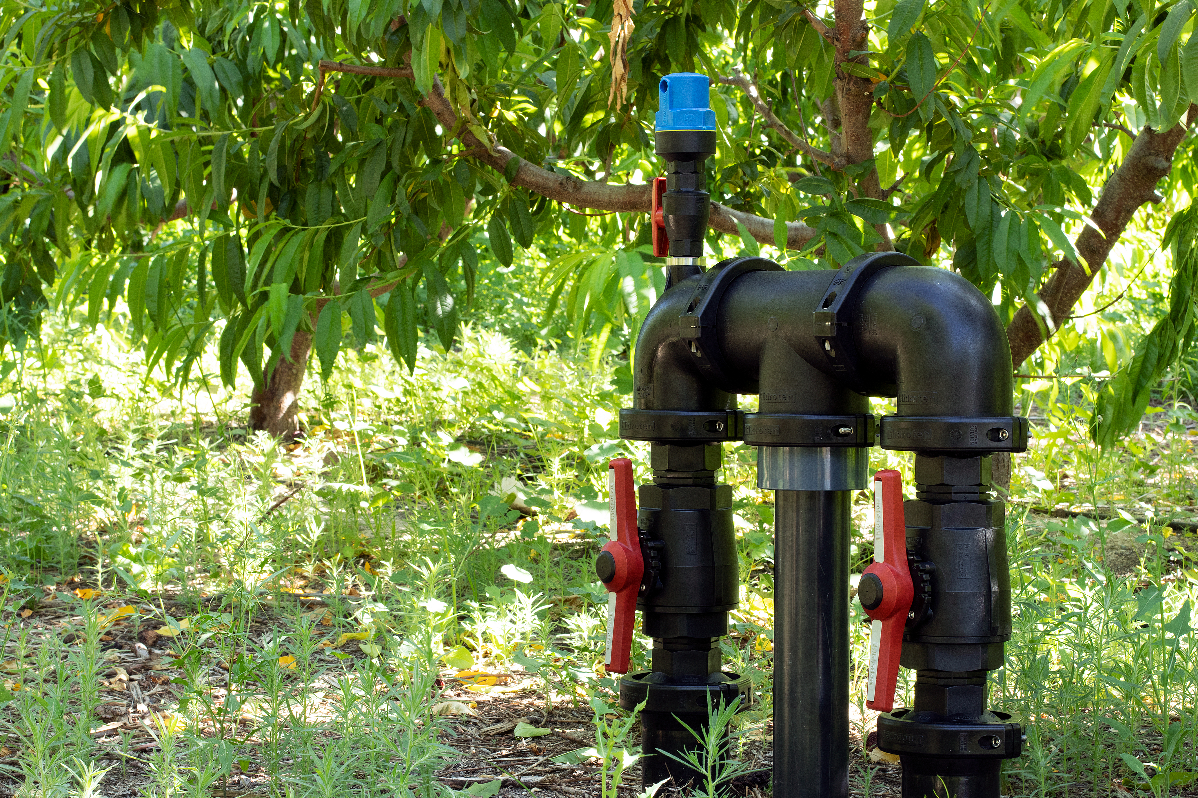 Irrigation bypass in a fruit tree farm - Alicante (Spain)
