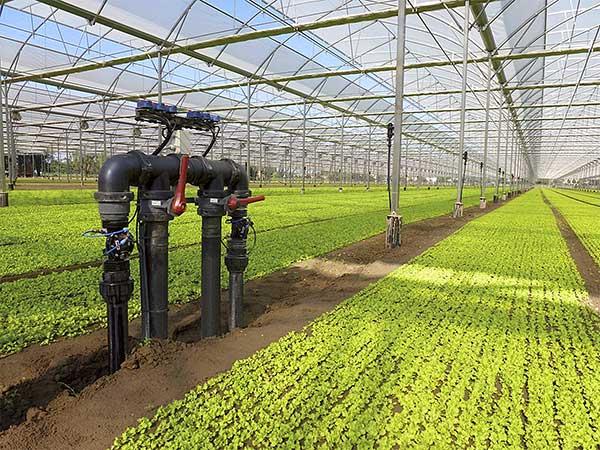 Instalación SNS en invernadero