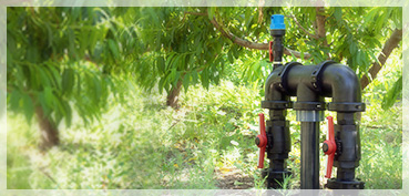 IRRIGATION BYPASS IN A FRUIT TREE FARM (Alicante)
